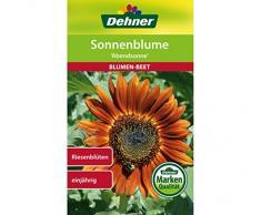 Dehner Blumen-Saatgut, Sonnenblume Abendsonne, 4 g Sementi, 5er Pack (5 x 4 g)