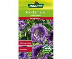 Dehner Blumen-Saatgut, Glockenrebe Violettkönigin, 2.5 g Sementi, 5er Pack (5 x 2.5 g)