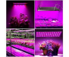 Coltivare indoor guida completa per il giardinaggio indoor