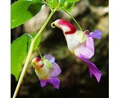 Wuwxiuzhzhuo - 20 rari semi di orchidea pappagallo, pianta da giardino, da balcone, bonsai, decorazione 1