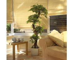 Pianta da salotto acquista piante da salotto online su for Pianta da salotto