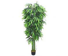 Pianta da salotto acquista piante da salotto online su for Bambu in vaso prezzo