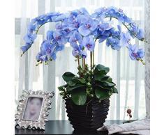 Rosepoem Pianta dei bonsai Semi di orchidea di farfalle Blu 20PCS