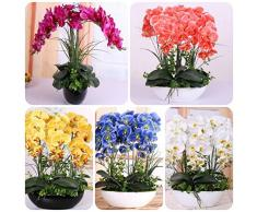 Wongfon Semi di Orchidea Phalaenopsis Misti, Semi di Fiori Farfalla rari per Giardino Bonsai Che piantano 200 Semi