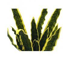 Euro Palms 82530577, Pianta ornamentale: Sansevieria Eva, 50 cm, Verde (Grün)