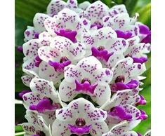 Steelwingsf Semi in vaso per casa e giardino, 50 pezzi, Phalaenopsis semi di orchidea ornamentali per paesaggi misti colori per piantare piante da giardino Phalaenopsis