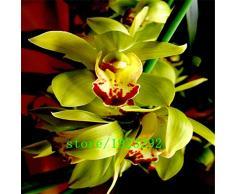 Grande promozione 100 PCS scuro semi rossi cinesi Cymbidium fiore orchidea Indoor Semi Fiori in vaso Cicada Orchid Seeds