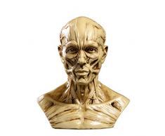 4'' Statua Busto Uomo In Resina Anatomia Muscolo Medico Artista Addobbi Casa Studio - Giallo