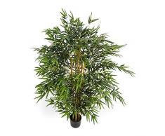 Pianta da salotto acquista piante da salotto online su for Pianta bambu prezzo