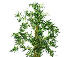 Bambú ornamentale con numerose cannette naturali, 210 cm - Bambú artificiale / Pianta decorativa - artplants