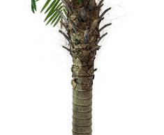 Palma Fenice artificiale con 10 ventagli, 150 cm - Palmizio / Pianta tropicale - artplants