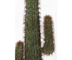 Cactus acquista cactus online su livingo - Cactus da interno ...