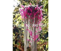 GETSO 100 Pezzi pianta rampicante Echinopsis tubiflora Pianta dei Bonsai raro Fiore perenne Ornamentale Mini pianta grassa: 9