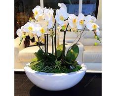 100 pz/sacchetto semi di orchidea, bonsai Farfalla phalaenopsis orchidea semi di fiori, balcone pianta per casa giardino indoor pot