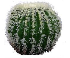 Cactus Grusone - Pianta Artificiale Da Arredo Interno - Diam 35 cm