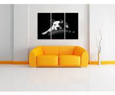 carino American Staffordshire su cuscino bianco / nero su 120x80 immagine su tela 3 pezzi tela di canapa, grande XXL Immagini completamente Pagina con la barella, stampa d'arte su murale con la struttura, gänstiger come la pittura