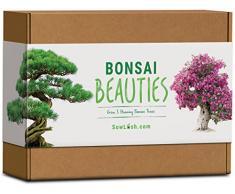 Sow Lush Bonsai Beauties, Set Regalo con Semi, Tutto Il Necessario per Coltivare 5 bellissime varietà di Alberi Bonsai