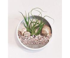 Fioriere da parete in metallo,vaso da appendere in vetro Supporto per piante in ferro rotondo Vasi Appendiabiti fiori Terrario a parete semplice con 3 viti Decorazioni interni per forniture domestiche