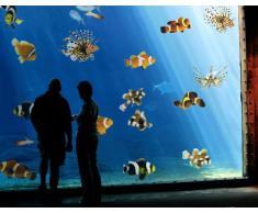 Adesivi per finestre no.390 Tropical Fishes Set, Tamaño:40cm x 40cm