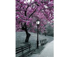 1art1 63288 - Poster New York, Ciliegio in fiore a Central Park, 91 x 61 cm