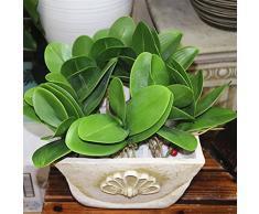 LEORX Fiore artificiale verde schiuma orchidea Phalaenopsis pianta foglia