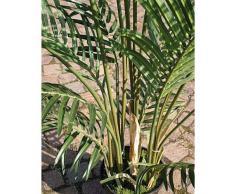Palma areca artificiale in vaso cementato, 12 ventagli, DELUXE, 90 cm - Pianta tropicale / Palmizio - artplants