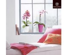 Eurographics WS-DT7049 - Adesivo per finestra riutilizzabile Orchidee, 25 x 70 cm