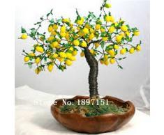 Grande vendita Bonsai Lemon Tree semi di alta sopravvivenza semi Tasso Albero da frutto Per la casa Gatden Backyard (50pieces)