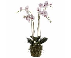 Emerald Orchidea Artificiale con Muschio Rosa Chiaro 419149