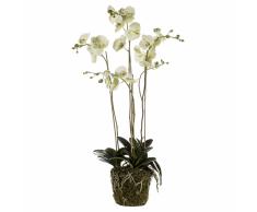Emerald Orchidea Artificiale con Muschio Verde Chiaro 419148