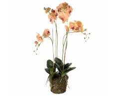 Emerald Orchidea Artificiale con Muschio Arancione 419150
