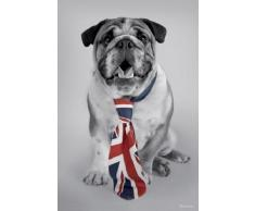1art1 54255 Poster Chiens Bulldog George avec Cravate Union Jack Rachael Hale 91 x 61 cm