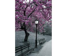1art1 63288 Poster New York Central Park Fleurs de Cerisiers 91 x 61 cm