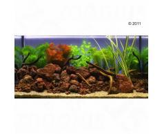 """Set di piante per acquario Zooplants """"Goldfish"""" - 9 piante"""
