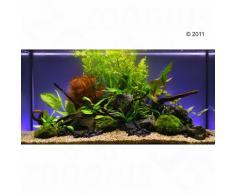 """Set piante per acquario Zooplants """"Assortimento Misto"""" - 13 piante"""