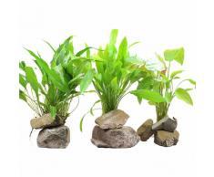 Set di piante XL Zooplants per sfondo acquario - 3 piante in vaso