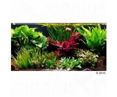 """Set di piante per acquario Zooplants """"Teatro verde XXL"""" - 33 piante"""