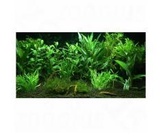"""Set di piante per acquario Zooplants """"Giardino Eden"""" - 12 piante"""