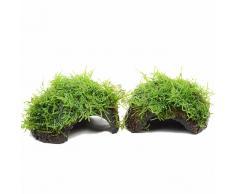 """Set di piante per acquario Zooplants """"Noce di cocco"""" - 4 mezze Noci di cocco - prezzo top!"""