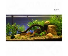 "Set piante per acquario Zooplants ""Oasi Verde"" - 13 piante"