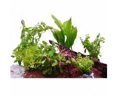 Set di piante acquatiche Zooplants per acquari di 60 cm - 7 piante in vaso