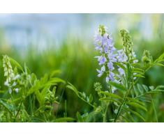 Plafoniera Fiori Lilla : Quadro fiori » acquista quadri online su livingo