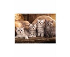 Zerbino Kitty (Marrone) - bpc living