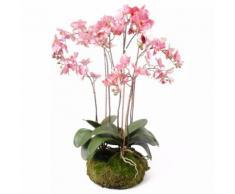 Emerald Orchidea Artificiale con Muschio Rosa 75 cm 417662