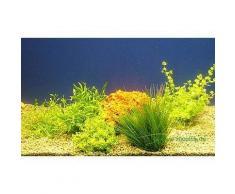 Set di piante acquatiche Zooplants per parte anteriore - 5 piante in vaso