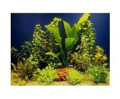 Set di piante acquatiche Zooplants per acquari di 80 cm - 10 piante in vaso
