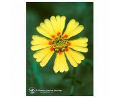 Natur Madia (Madia Elegans) Essenze Californiane 7,4ml