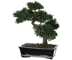 Mica VB 351203 - Bonsai carmona