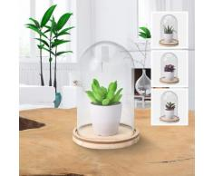 Pianta decorativa con cupola in vetro