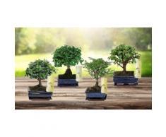 Set di 2 bonsai cinesi
